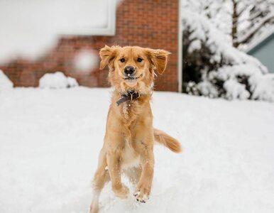 Pies codziennie wyczekuje listonosza. Tak go wita