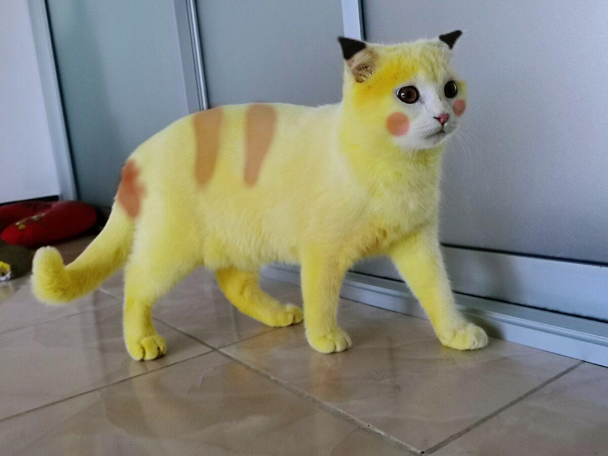Żółty kot Ka-Pwong, przerobiony w programie graficznym na Pikachu