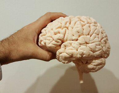 Odzyskaj zdrowie mózgu dzięki temu 10-dniowemu planowi