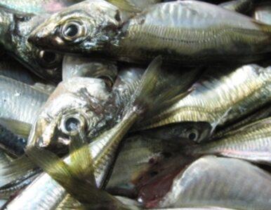 Kobiety w ciąży powinny jeść ryby