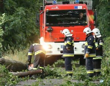 Nawałnica przeszła nad Gorzowem. Połamane drzewa i słupy energetyczne