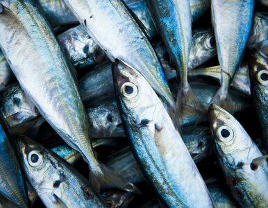 Wpływ spożycia ryb i ekspozycji na rtęć w czasie ciąży na zdrowie...