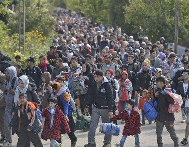 """Do Niemiec trafi milion uchodźców z Syrii? """"To kompletne szaleństwo"""""""