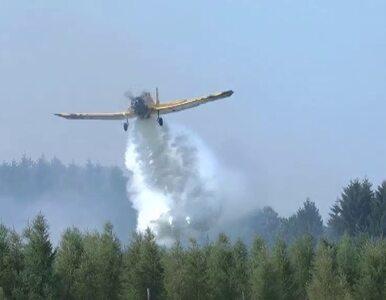 100 hektarów w ogniu. Samolot pomaga opanować ogień