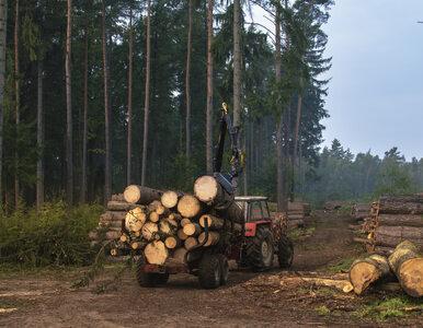 Nowelizacja ustawy o wycince drzew czeka na podpis prezydenta