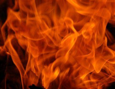Wielkopolska: wybuchł gaz. Płonie las, płoną domy
