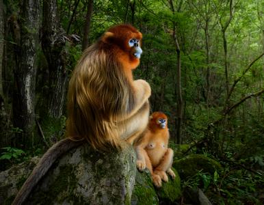 Nagrodzone oraz wyróżnione zdjęcia w konkursie Wildlife Photographer of...