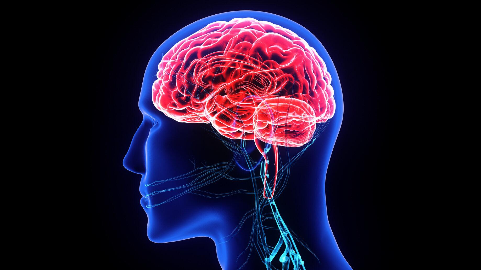 Kobiecy mózg waży średnio: