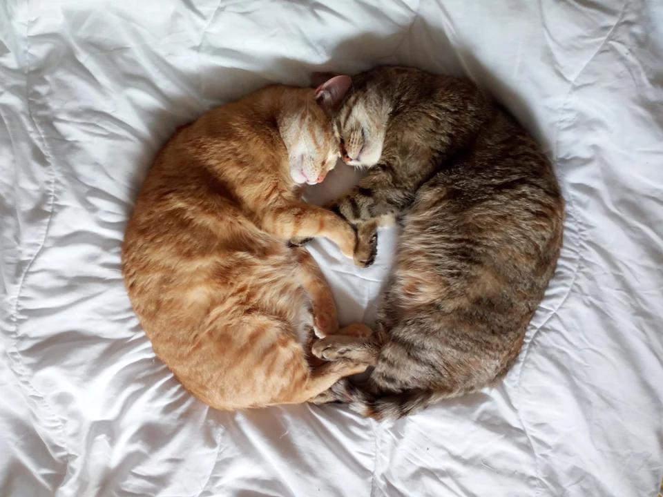 Koty śpią w nietypowej pozycji