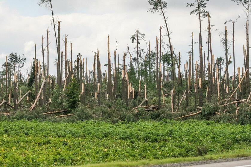 Wygląd lasu w okolicy Suszku po nawałnicy z 2017 roku