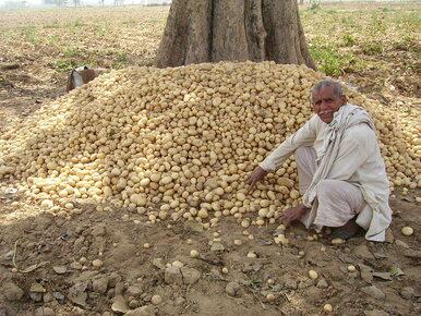 PepsiCo pozywa rolników z Indii. Bo uprawiają ziemniaki zastrzeżone dla...