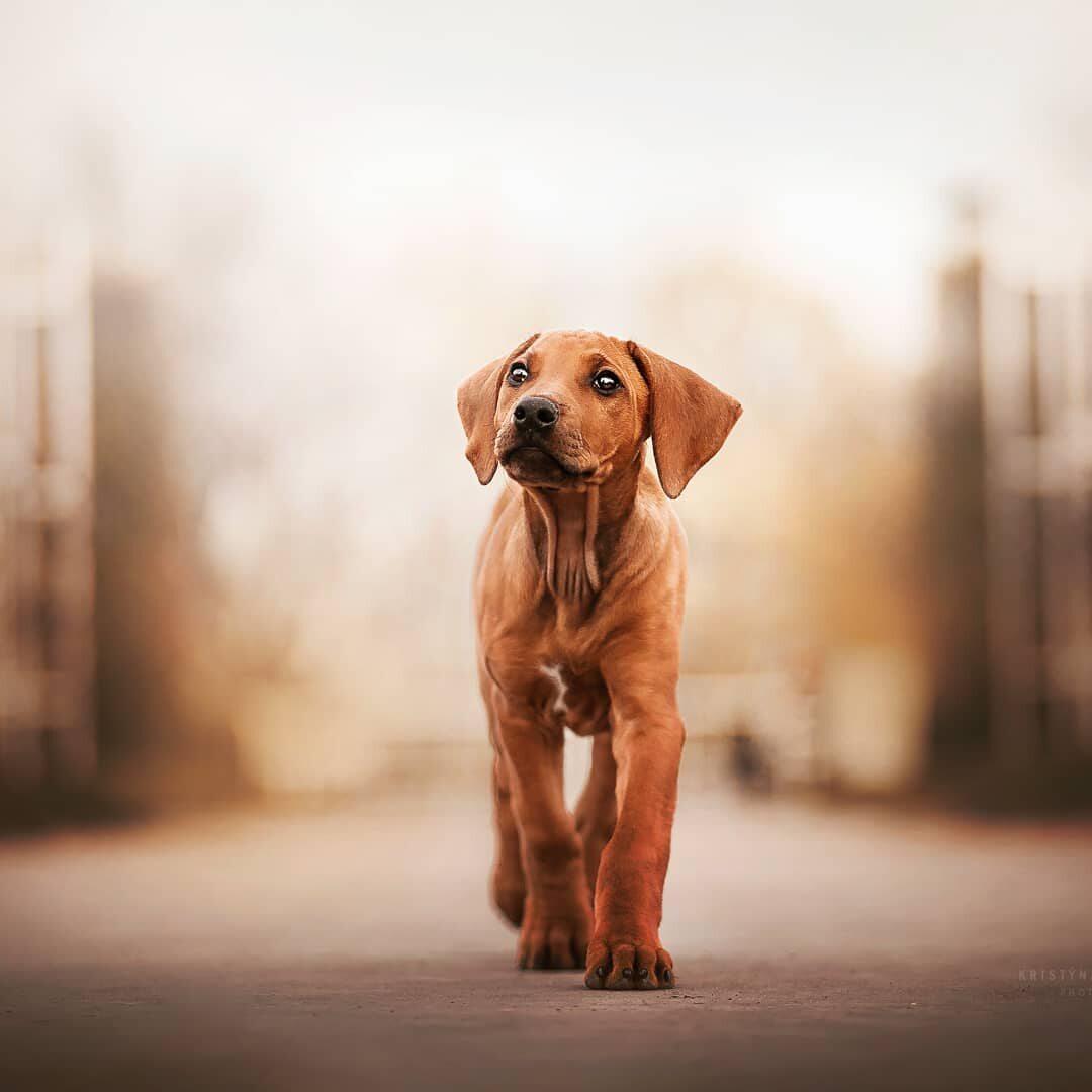 Zdjęcia psów