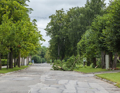 Orkan Grzegorz przeszedł nad Polską. Nie udało się uniknąć ofiar...