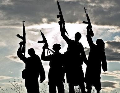 W urzędzie miejskim w Brukseli podrabiano paszporty dla dżihadystów