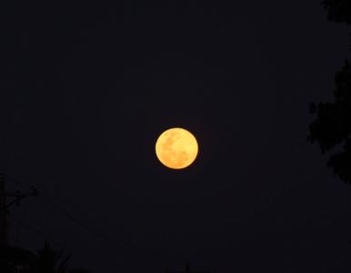 Pełnia Różowego Księżyca. Kiedy warto patrzeć w niebo?