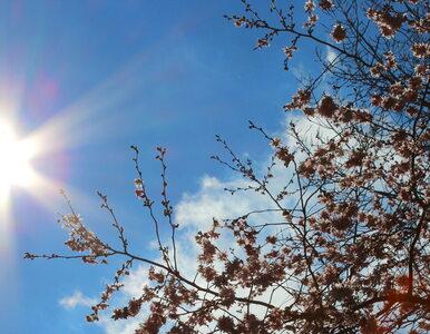 Przed nami słoneczny dzień. Będzie ciepło, ale uwaga na burze!