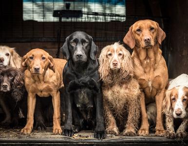 Psi fotograf roku 2018 - zwycięzcy w poszczególnych kategoriach