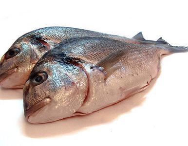 PE przyjął sprawozdanie Wałęsy w sprawie zarządzania stadami ryb