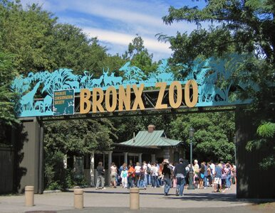 Przeprosiny po 114 latach. Nowojorskie zoo potępiło zamknięcie...