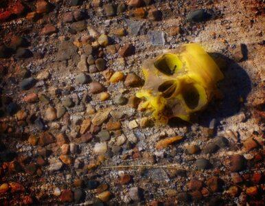 Olkusz: wymieniali rury, znaleźli kości Żydów