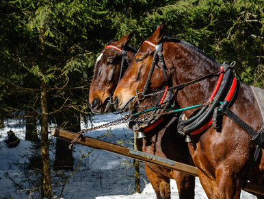 Konie spłoszyły się na drodze do Morskiego Oka. Ranny turysta z Koszalina