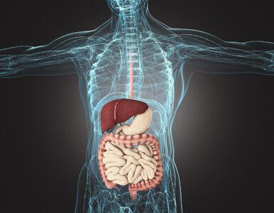 Naukowcy odkryli rolę wyrostka robaczkowego w organizmie człowieka