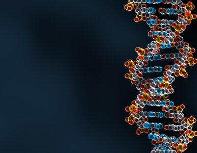 Skradziono 14 tys. próbek z materiałem DNA