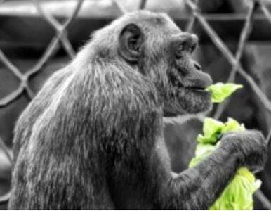 W sierpniu Zoo Safari obchodzić będzie piąte urodziny