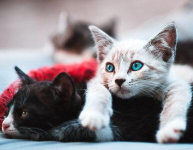 Ciała kotów gotowała w garnku i karmiła nimi inne zwierzęta? 87-latka...