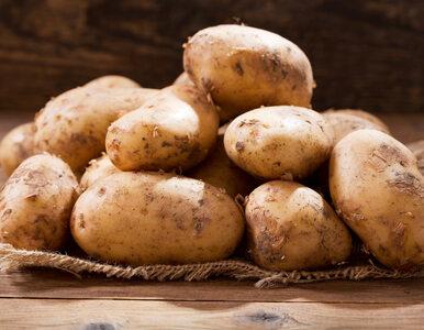 Ziemniaki – tanie, zdrowe... i wcale nie tuczą!
