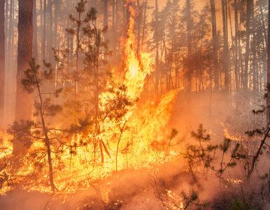 Płomienie przy autostradzie A1. Poparzeni rolnicy