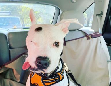 Pies został postrzelony i pobity młotkiem. Stracił prawe oko, ale i tak...