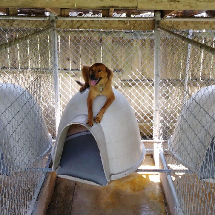 Psy i koty w schroniskach